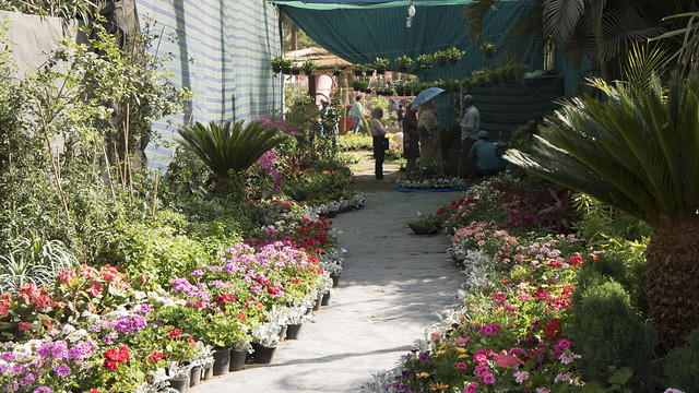 A flowery path at Egypt's Spring Flowers Fair 2018