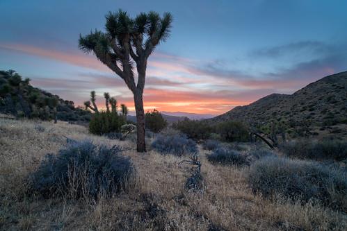 california highviewnaturelooptrail joshua places summer tree sunset d850