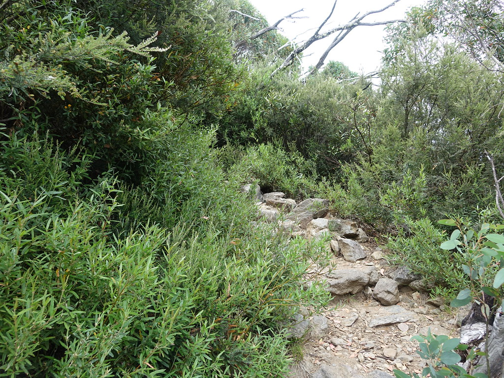 Path, Mount Bogong