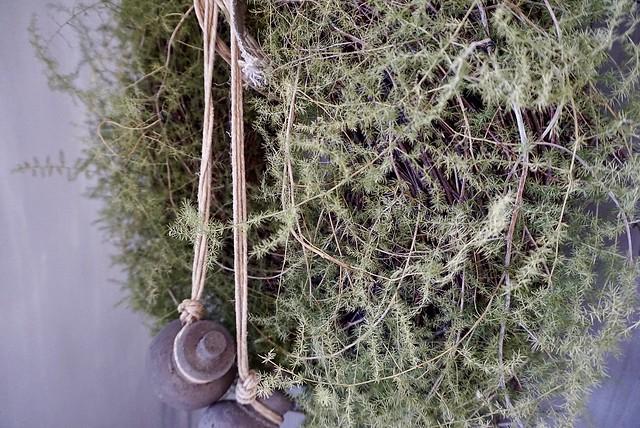 Asparagus krans
