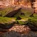 Sandstone & Seaweed