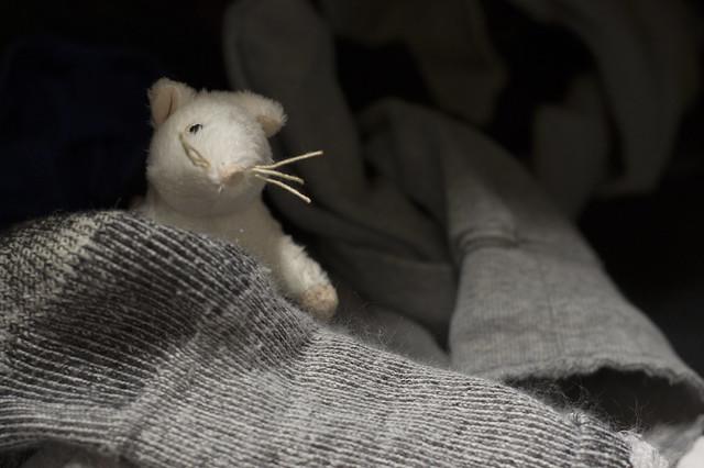March 25 - Laundry rat