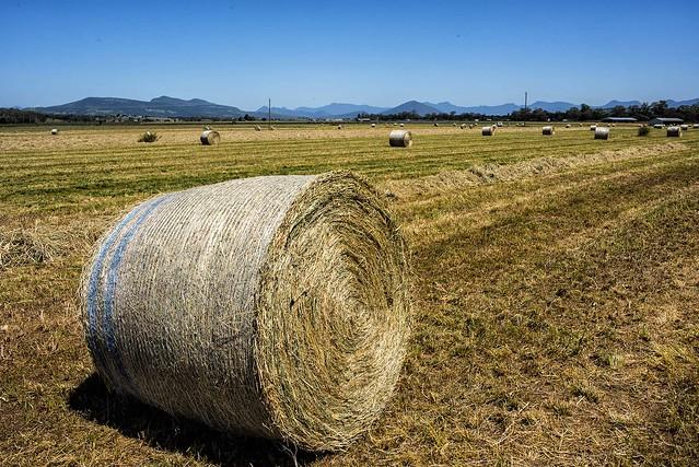 Rural Harvesting, Nikon D810, AF-S Nikkor 28mm f/1.8G