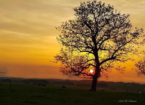 Soleil dans l'arbre111