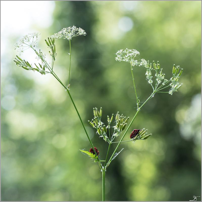 Envie d'insectes 42301391141_c57915381c_c