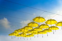 The Yellow Umbrellas