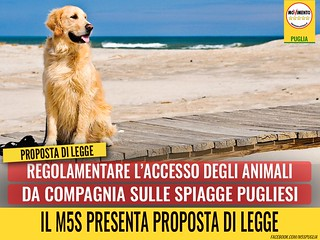 accesso animali spiagge