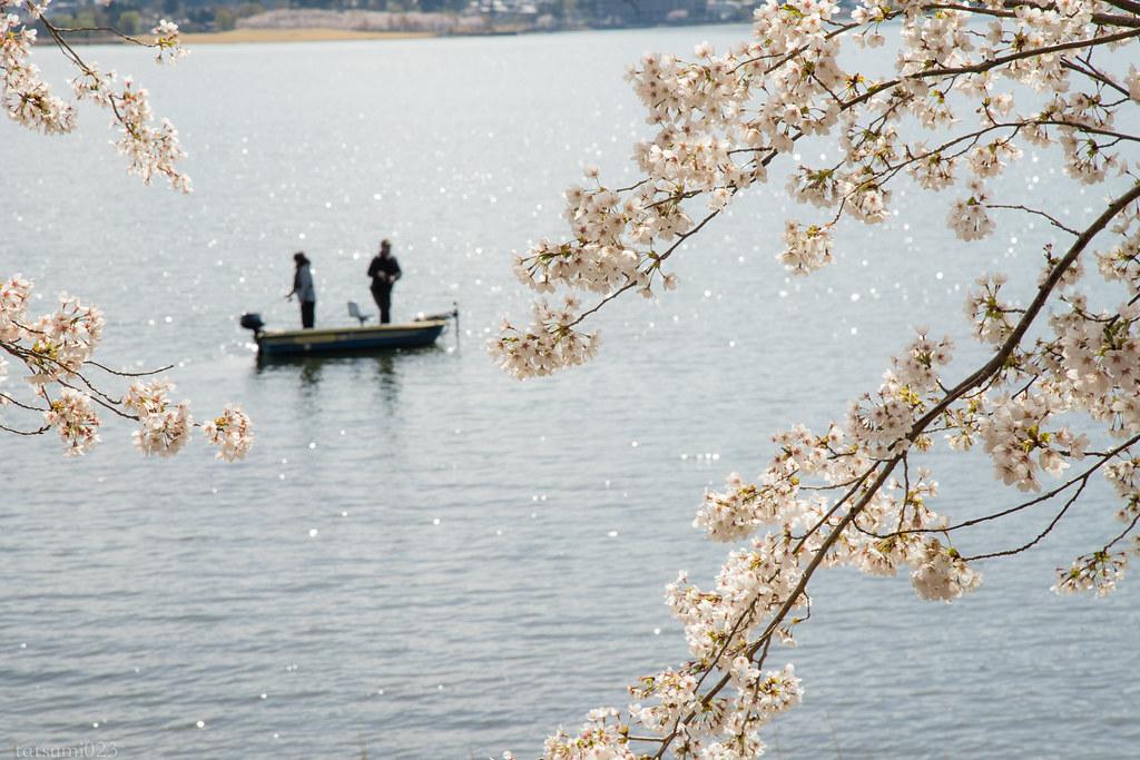 2018-04-13 河口湖の桜 004
