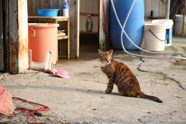 interesting kitty, Canon EOS 6D, Canon EF 24-105mm f/4L IS
