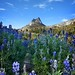 Cathedral Pass Lupine Meadow - Yosemite by Bruce Lemons