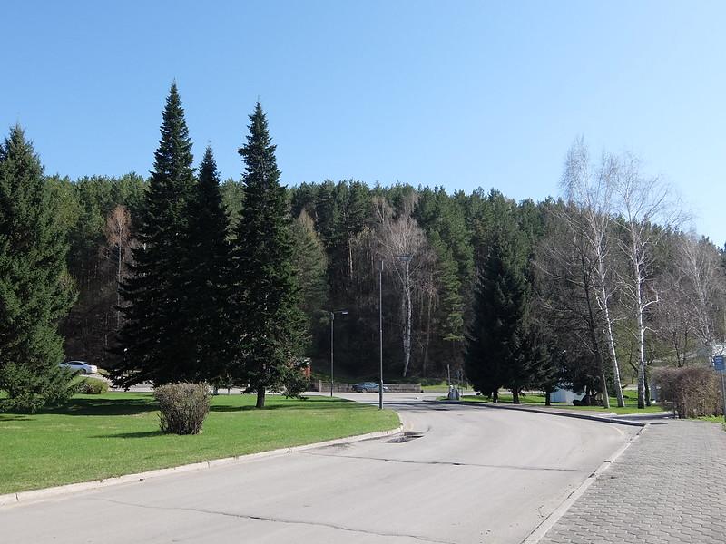 Белокуриха - Дорога