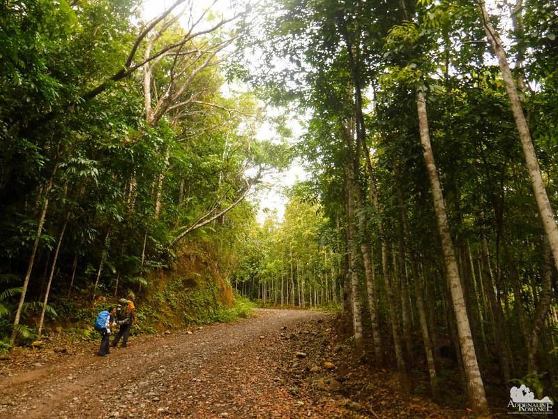 DENR Reforestration Project