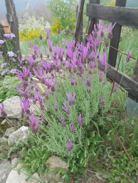 les jardins sont beaux en mai ! - Page 2 41379255344_32c64dcf27_z