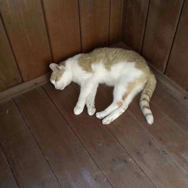 Felix_sleep