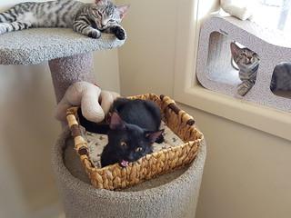 Three sleepy kittens