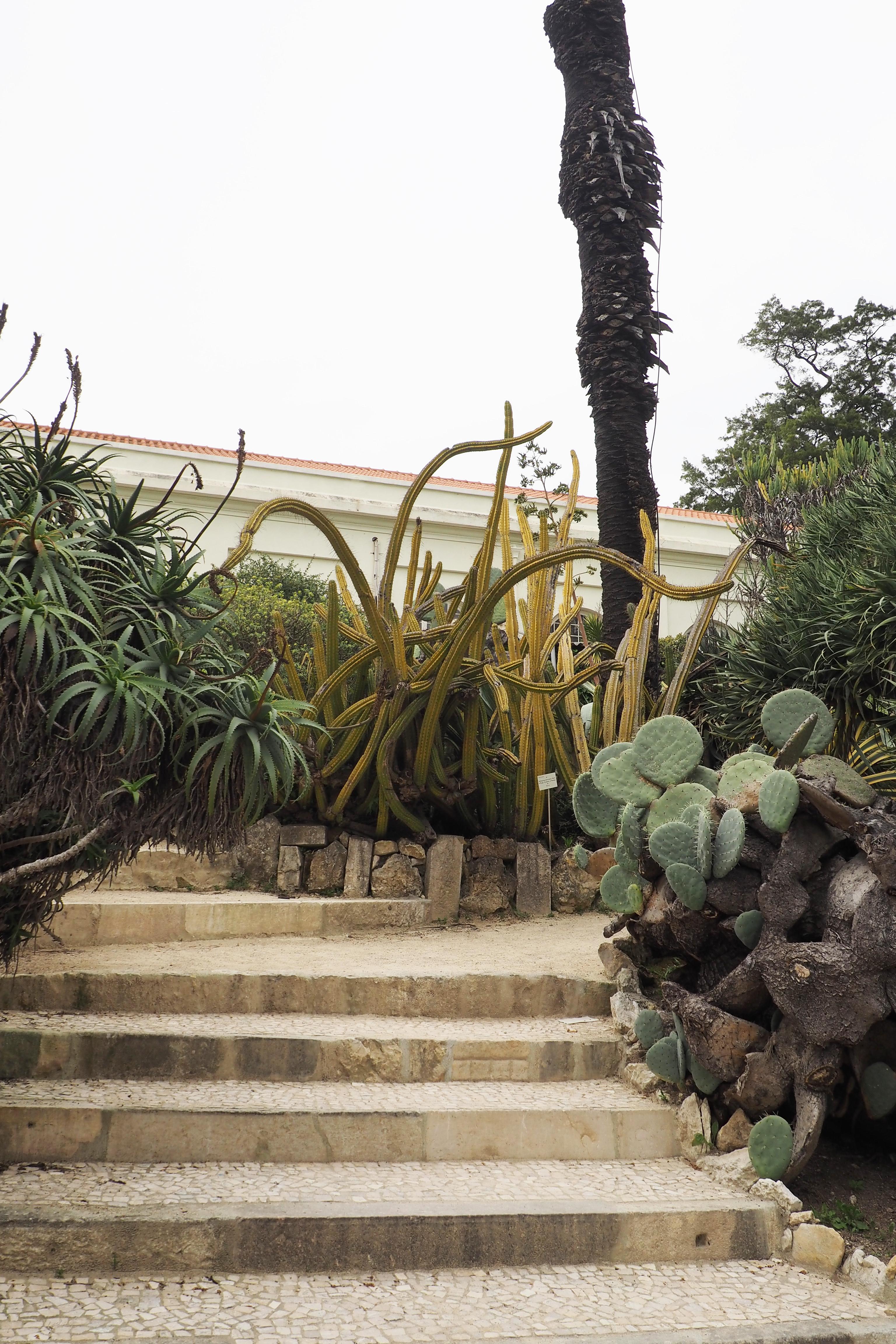 lisbon botanic garden
