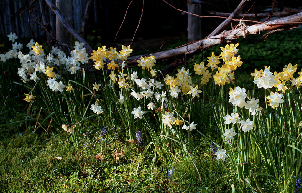 Sedgwick Gardens