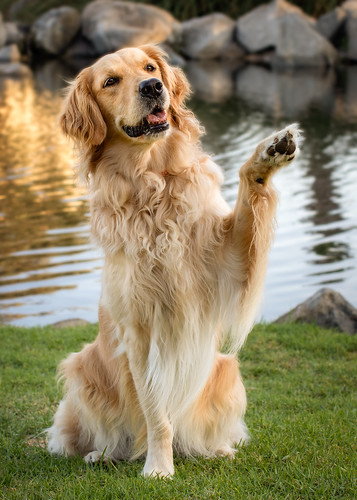 Wave Your Paw in the Air...Like You Just Don't Care