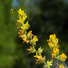 In the yellow time of pollen