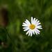 Daisy 5992