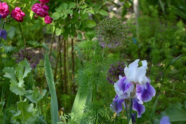les jardins sont beaux en mai ! - Page 6 42136507591_41ebed1901_z