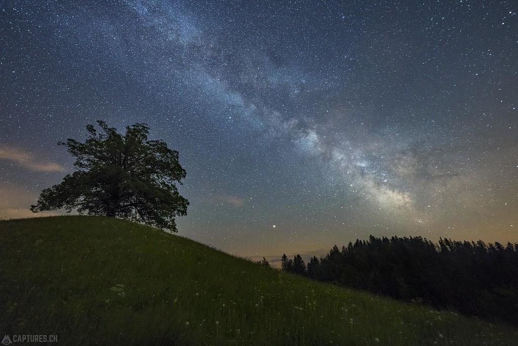 Tree and stars - Oberrämis