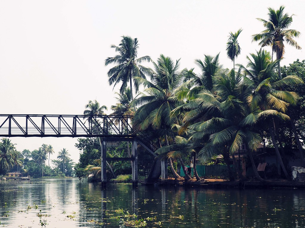 Backwaters of kerela fashionicide travel guide palm trees_effected