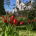 The Clock Tower & the Red Tulips (Portrait)