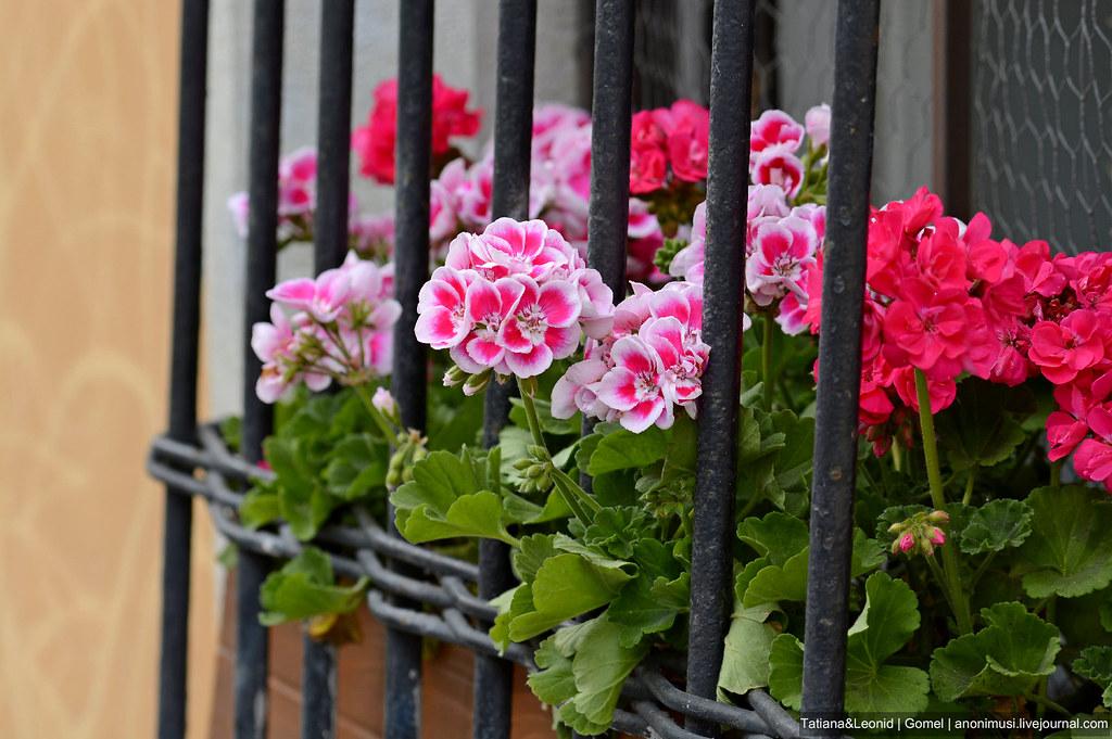 Цветы Будапешта