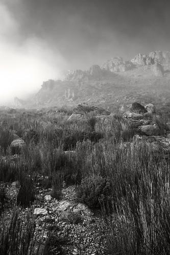 mist mtowen mountain bushwalking wilderness westcoasttasmania landscape blackandwhite sonya7r2 sonyfe28mmf20