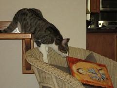 p369 Cat Knocks Picture