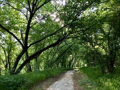 The Pathway beyond Robinwood toward Blazer Field
