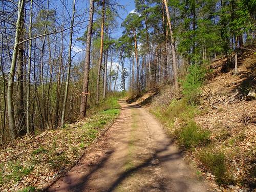 Le chemin vers le Gimbelhof