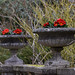 The Chalet Open Garden - Caterham, Surrey