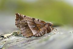 HolderEarly Thorn, Beckermet, Cumbria, England