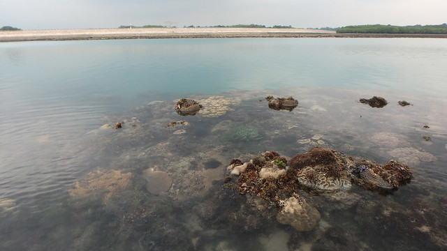 Living reefs of Terumbu Semakau, May 2018