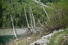 2018-04-30-132555 balkany majowka_dsc8112