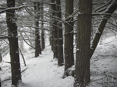 Snow hike... - Leesburg Virginia, January '02