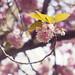 Blossom Swirl