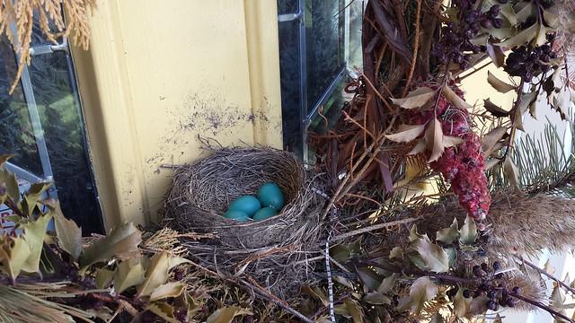 Baby Robin nest