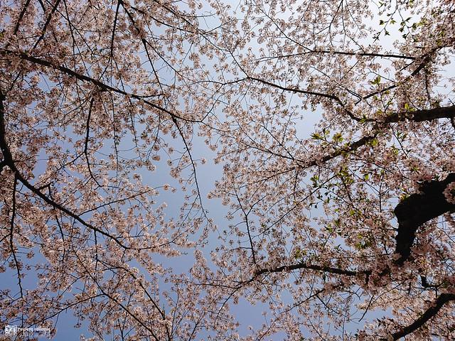 旅行若是一幅掌中的風景 | Sony Xperia XZ2 | 85