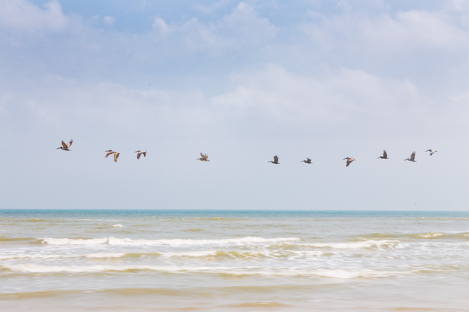 Pelicans at Padre Island