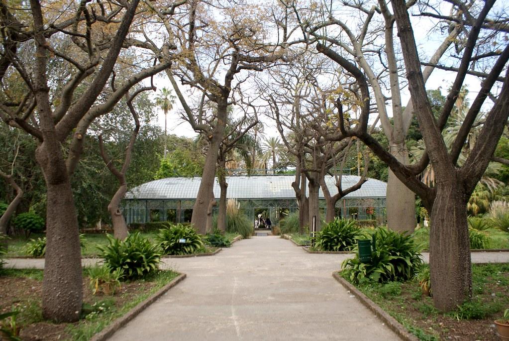 Une autre serre encadrée par de solides arbres dans le jardin botanique de Palerme en Sicile.