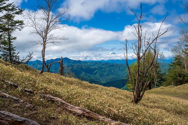 歩きやすい笹の登山道より見る富士山