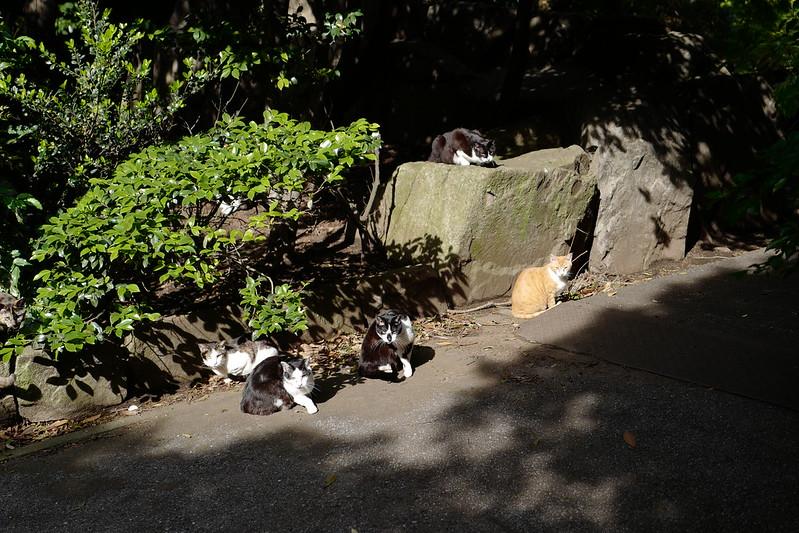 Leica Q東池袋中央公園の猫 朝向ぼっこな猫だまり