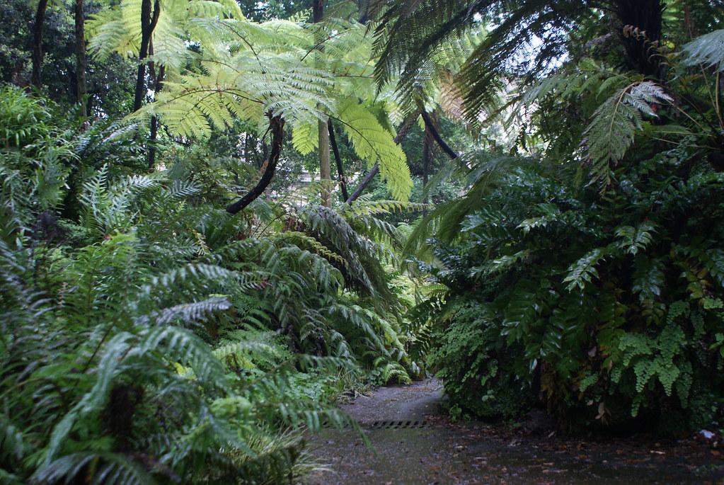 Forêt de fougères arborescentes dans le jardin botanique de Naples après la pluie.