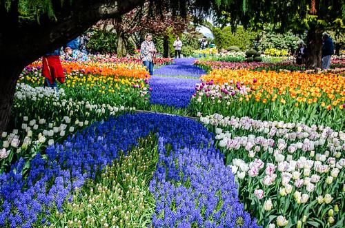 Roozengaarde Tulips-046