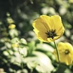 20180502-123925 - Flower Bokeh