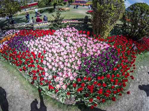 Skagit Valley Tulips-191