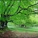 Verde relajante I